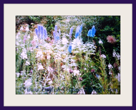 Cottage Garden Plants In The English